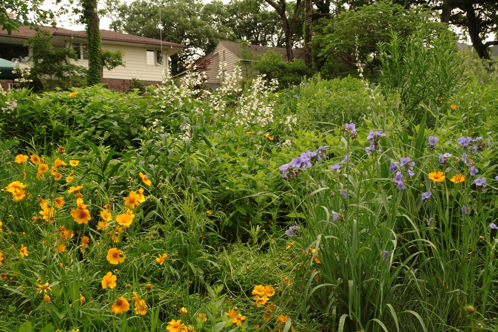 Backyard Native Plant Restoration